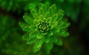 10 curiosidades sobre a cor: Verde